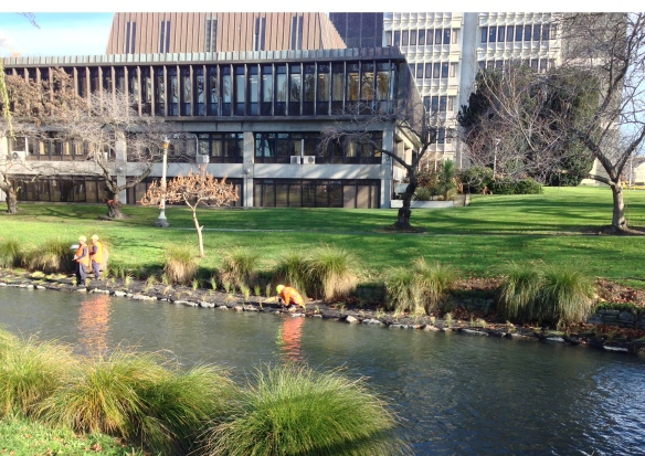 Planting along the riverbank at Victoria Square/Law Courts area.