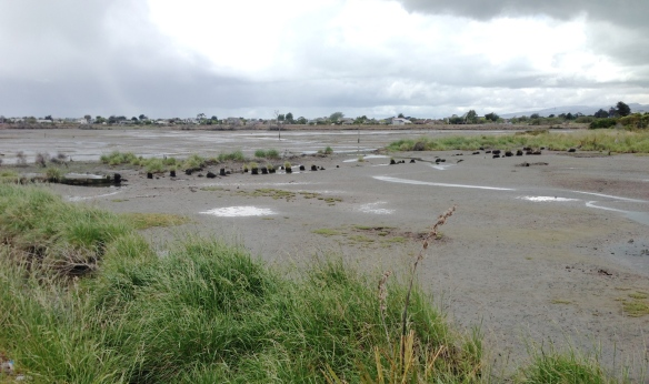 Bexley Wetland, at the mouth of the Avon River
